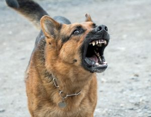 Dog Aggression: Why My Dog Bites Me for No Reason?