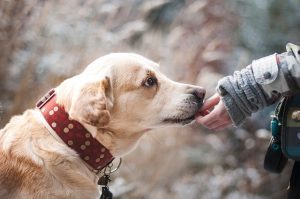 Read more about the article Flea Pills for Dogs: How do they work? Are they really effective?
