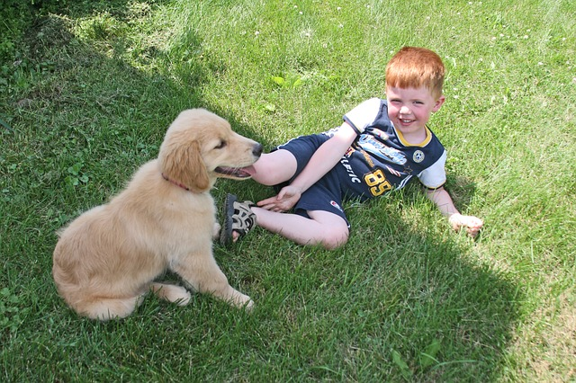 best dogs for kids dog kid photo