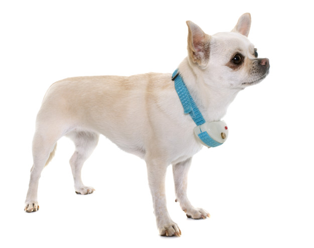 Dog Anti Bark Collar – In-Depth Guide