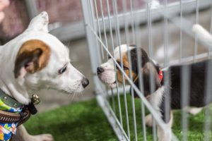 How To Choose A Dog Kennel – An In-Depth Guide